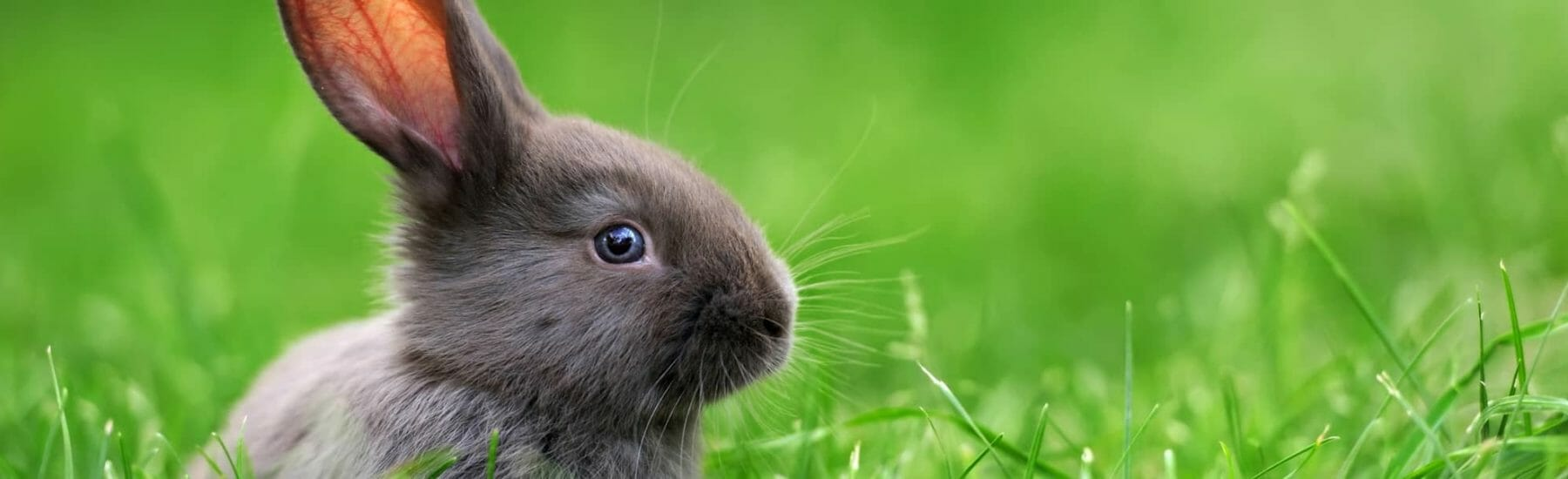 Small rabbit sitting in the grass